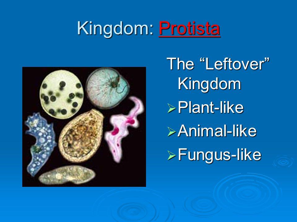 Kingdom: Protista The Leftover Kingdom Plant-like Animal-like