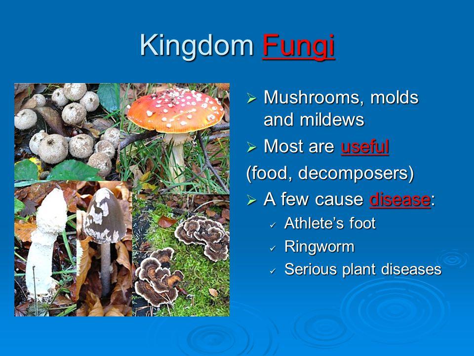 Kingdom Fungi Mushrooms, molds and mildews Most are useful