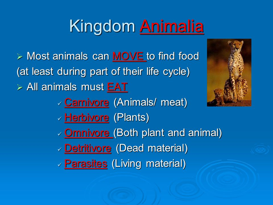 Kingdom Animalia Most animals can MOVE to find food