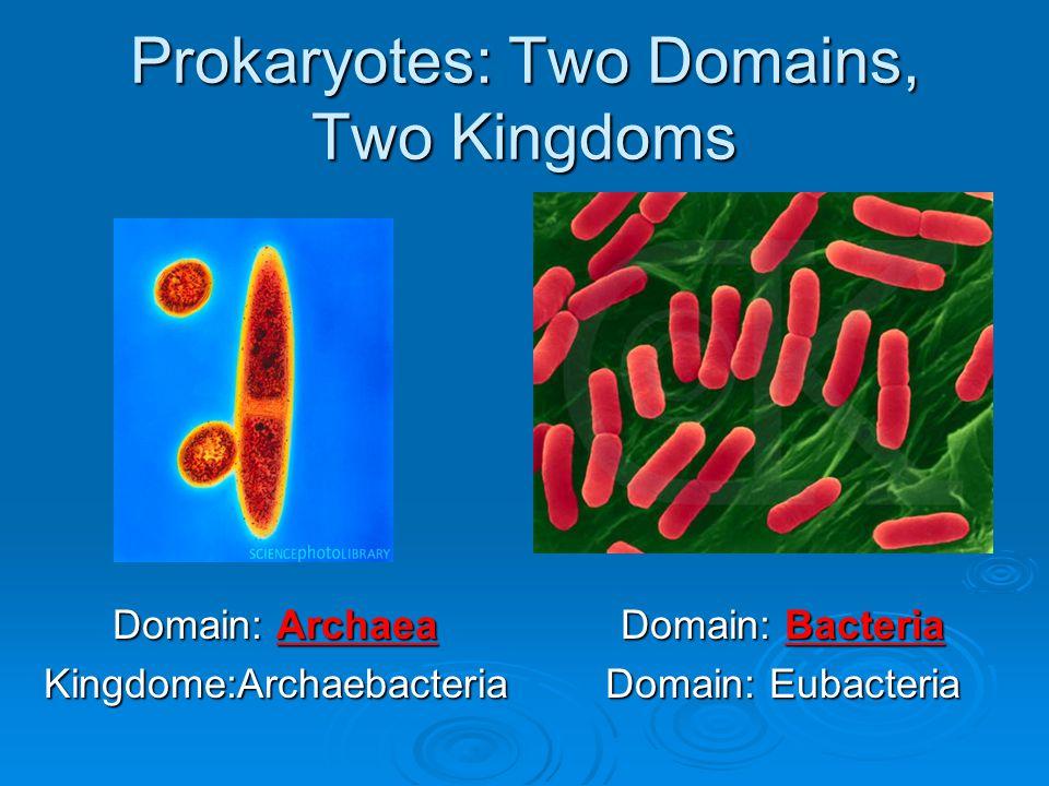 Prokaryotes: Two Domains, Two Kingdoms