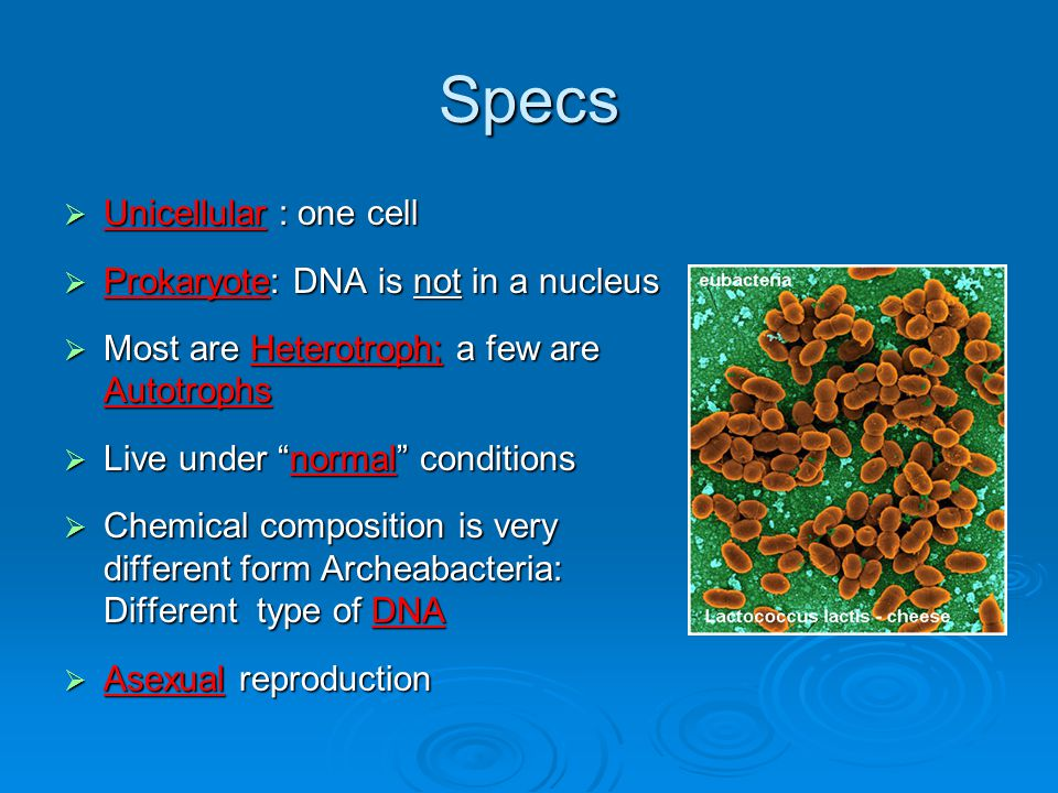 Specs Unicellular : one cell Prokaryote: DNA is not in a nucleus