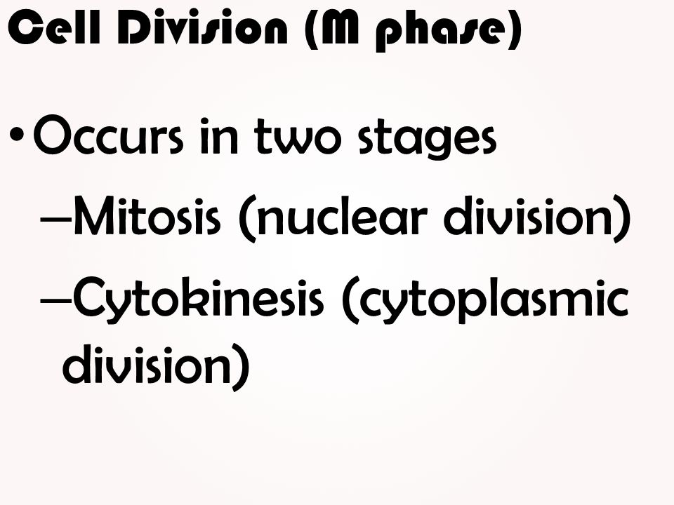 Cell Division (M phase)
