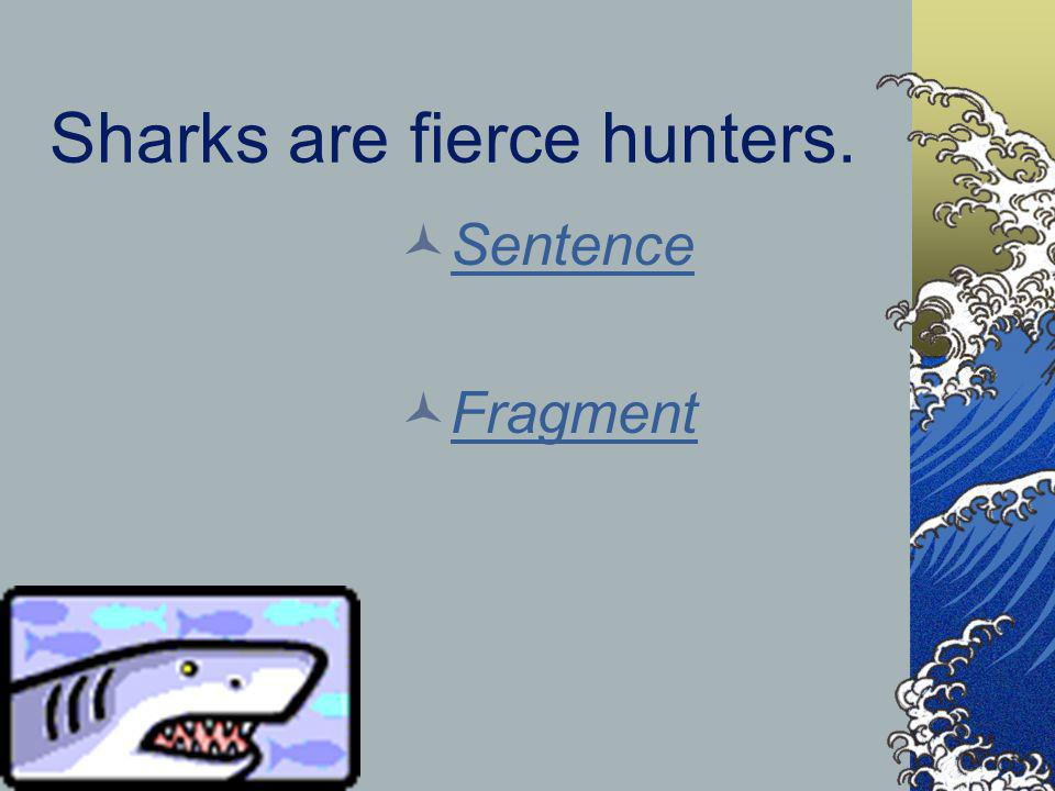 Sharks are fierce hunters.