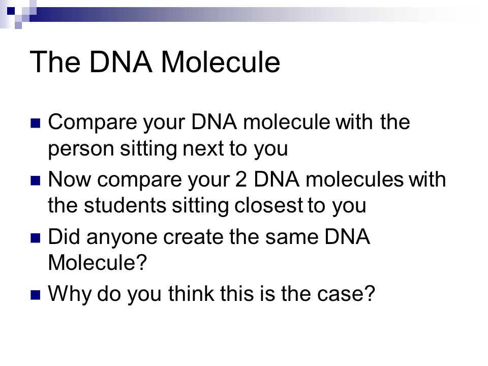 The DNA Molecule Compare your DNA molecule with the person sitting next to you.