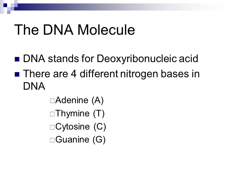 The DNA Molecule DNA stands for Deoxyribonucleic acid