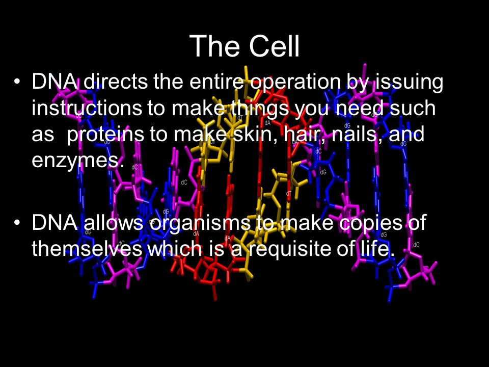 The Cell DNA directs the entire operation by issuing instructions to make things you need such as proteins to make skin, hair, nails, and enzymes.