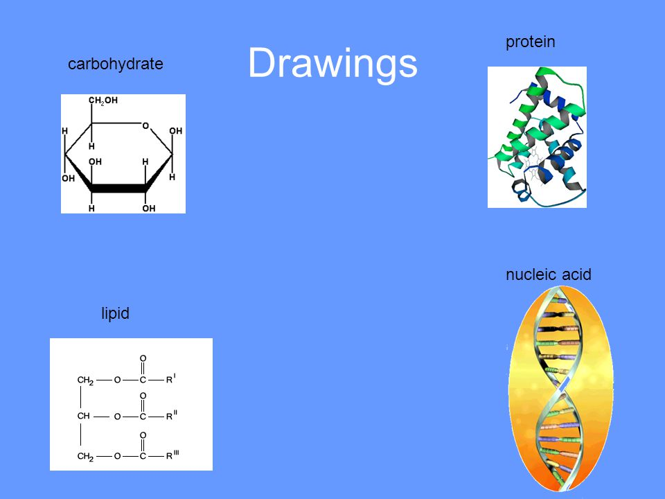 Drawings protein carbohydrate nucleic acid lipid