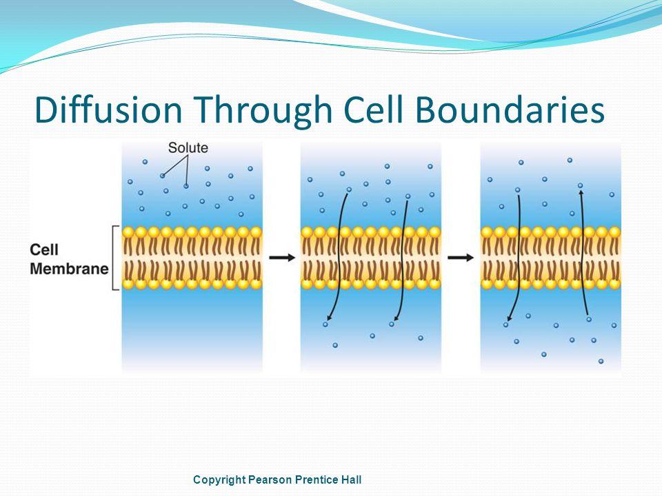 Diffusion Through Cell Boundaries