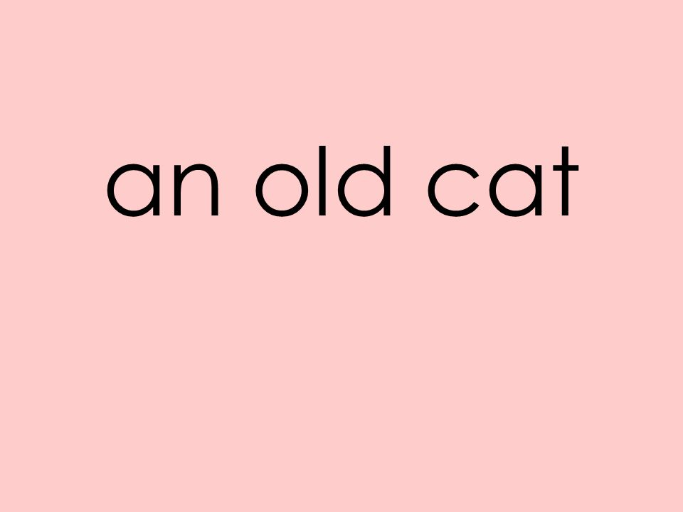 an old cat
