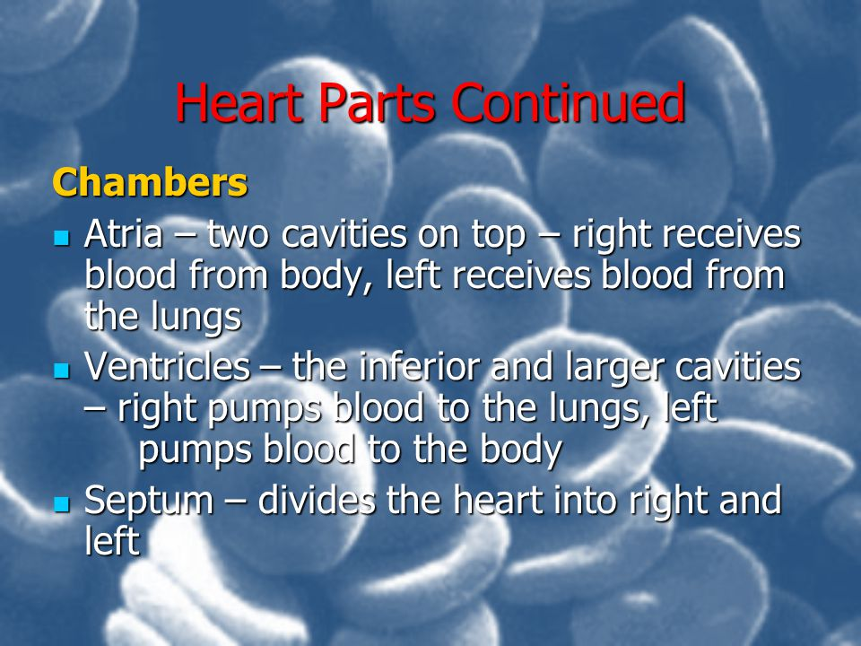 Heart Parts Continued Chambers