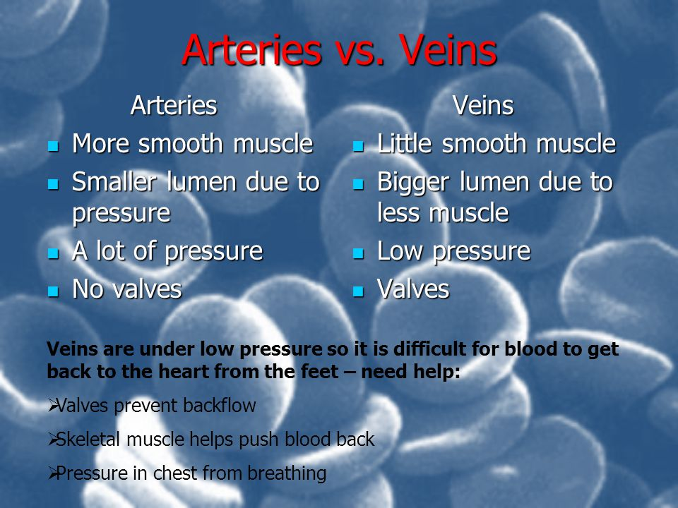 Arteries vs. Veins Arteries More smooth muscle