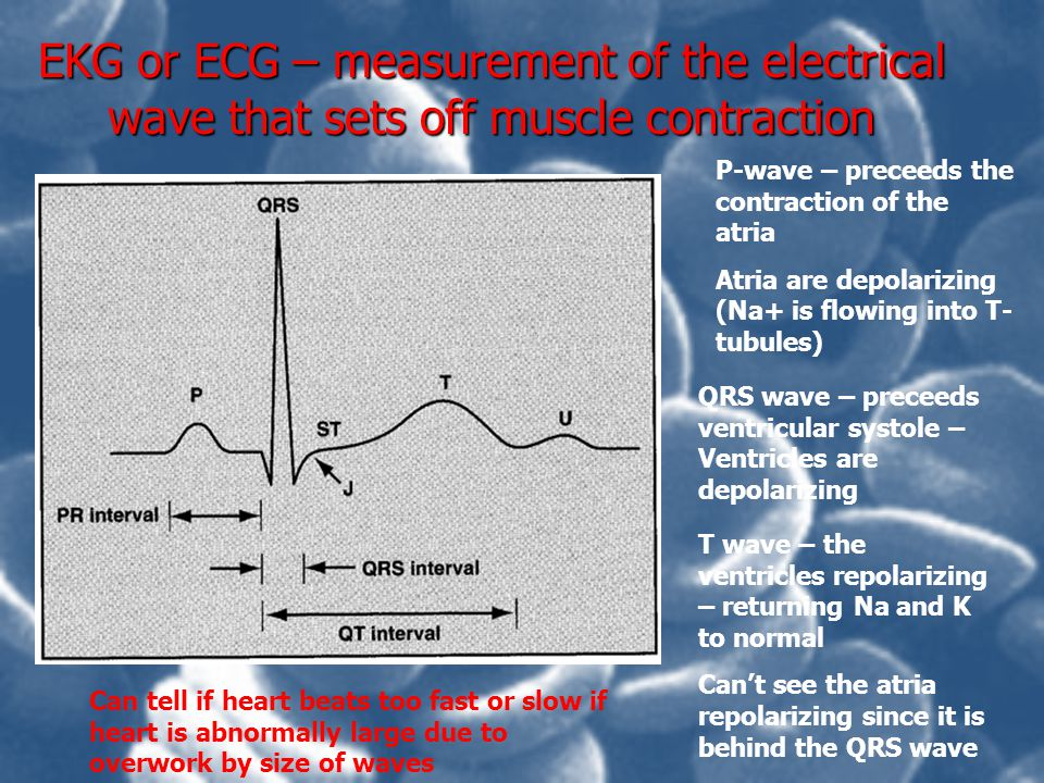EKG or ECG – measurement of the electrical wave that sets off muscle contraction