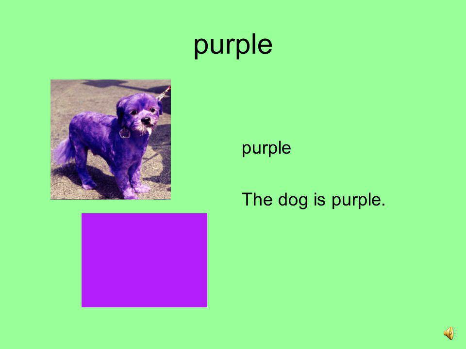 purple purple The dog is purple.
