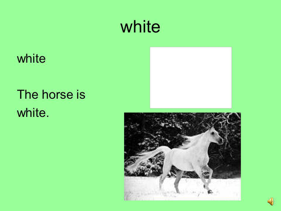 white white The horse is white.
