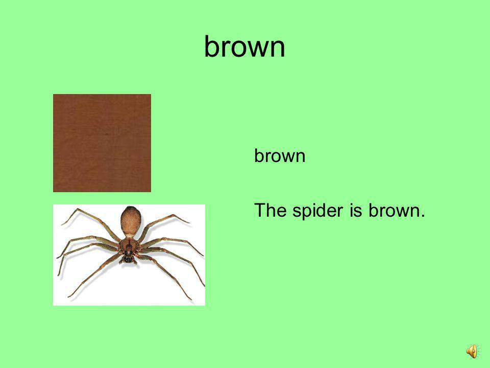 brown brown The spider is brown.