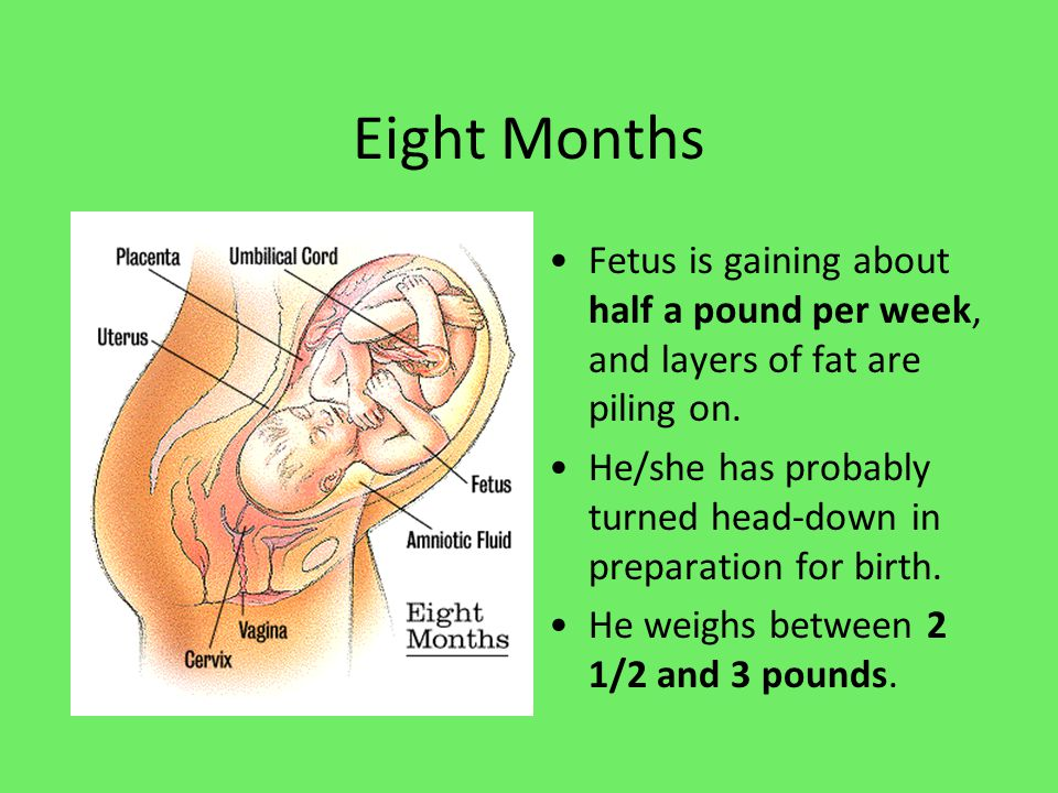 Eight Months Fetus is gaining about half a pound per week, and layers of fat are piling on.