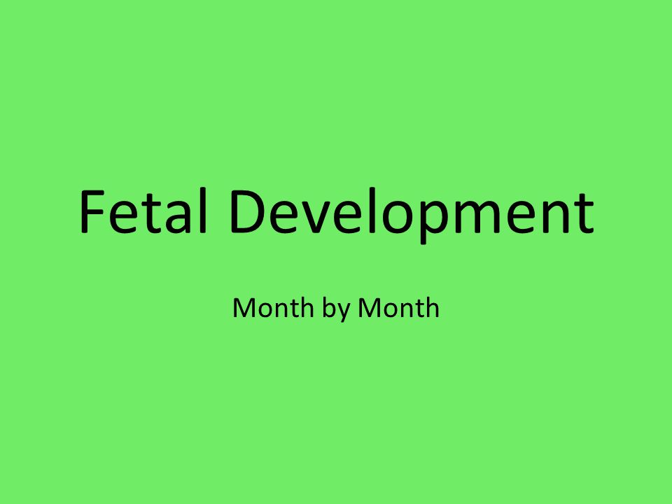Fetal Development Month by Month