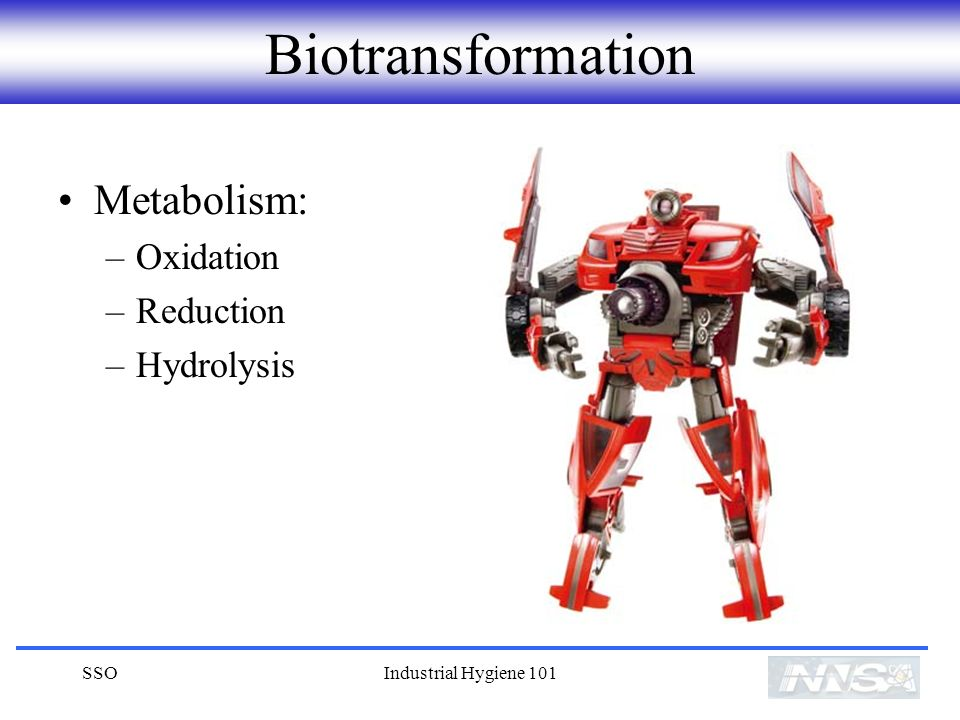 Biotransformation Metabolism: Oxidation Reduction Hydrolysis SSO