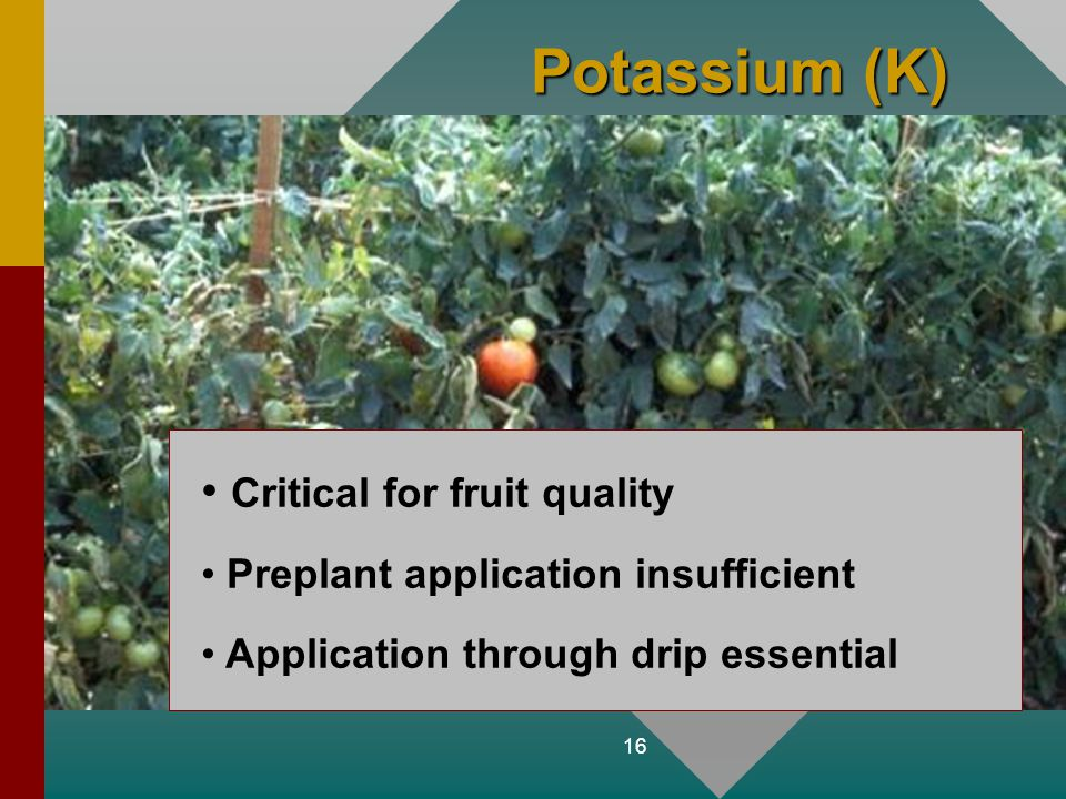 Potassium (K) Critical for fruit quality