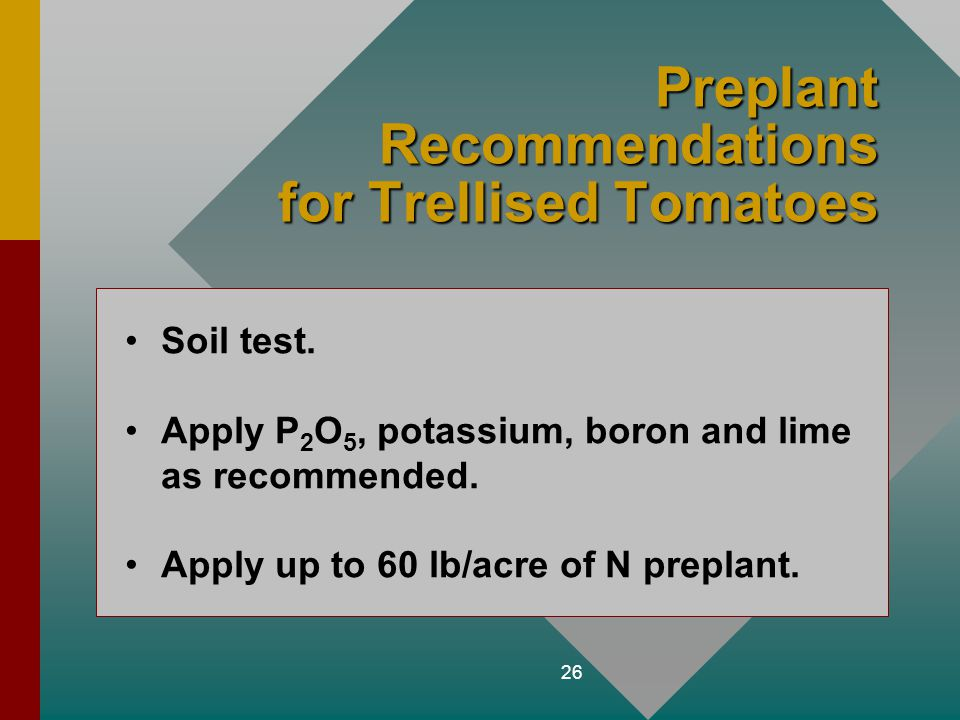 Preplant Recommendations for Trellised Tomatoes