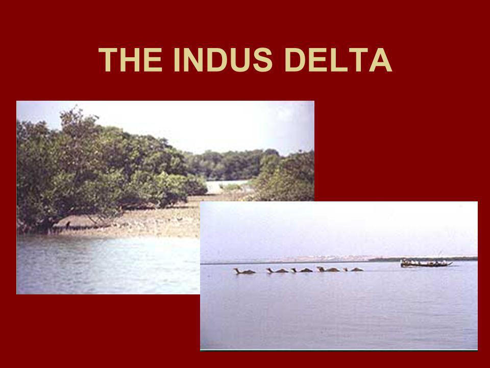 THE INDUS DELTA