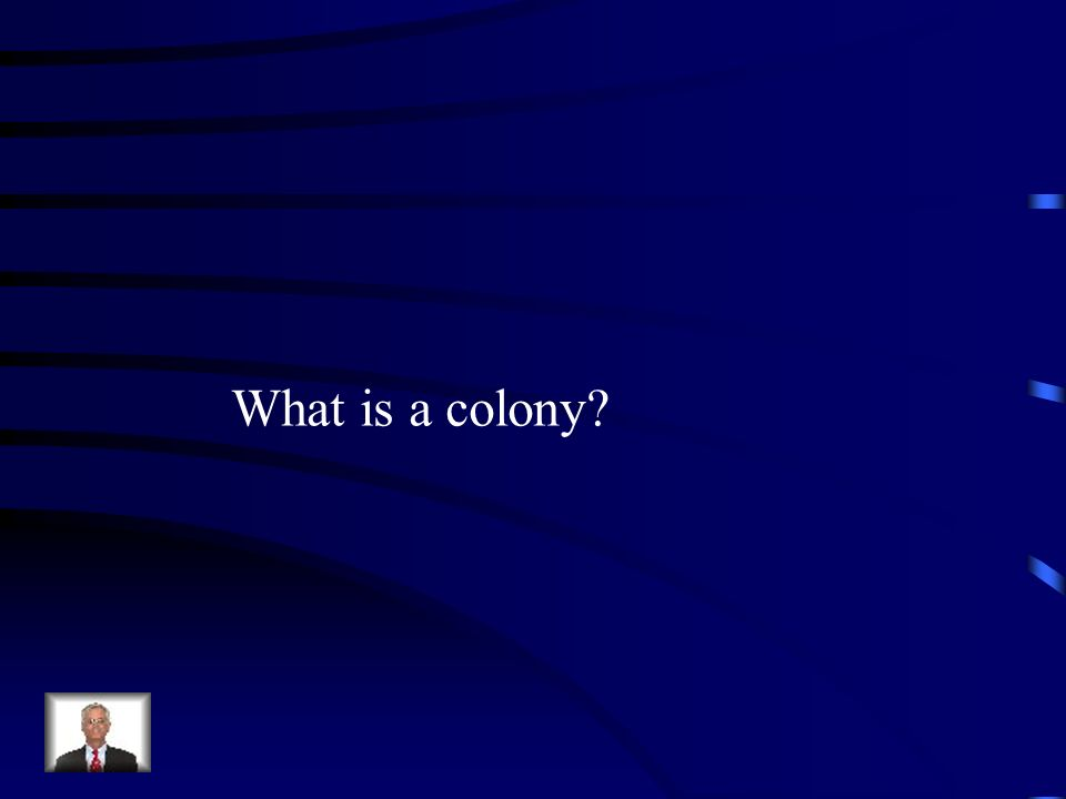What is a colony