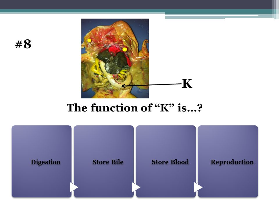 #8 K The function of K is… Digestion Store Bile Store Blood
