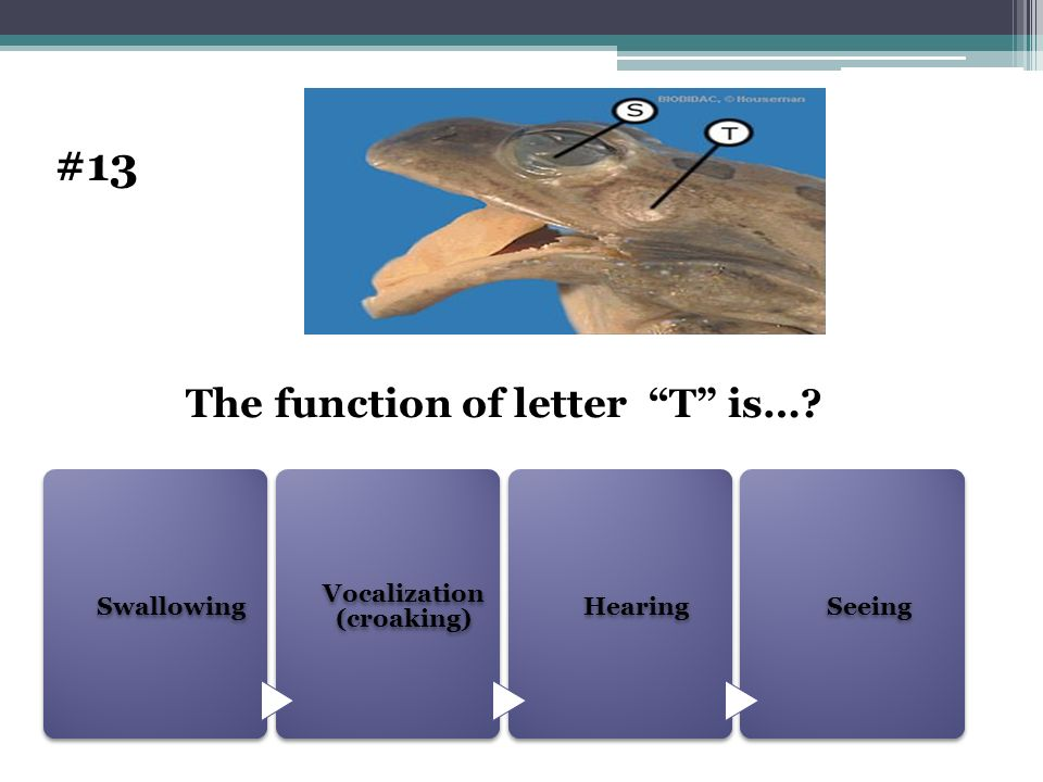 The function of letter T is…