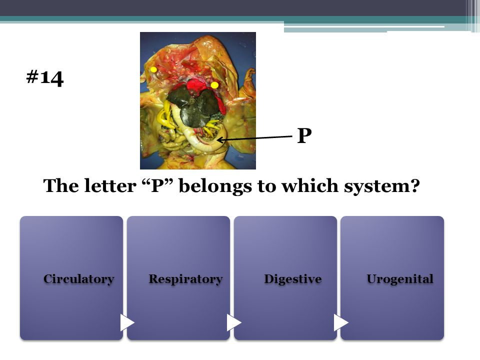 The letter P belongs to which system