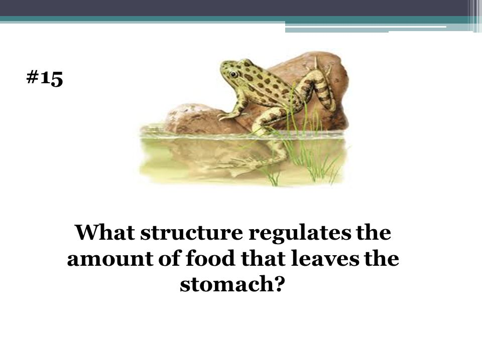 What structure regulates the amount of food that leaves the stomach