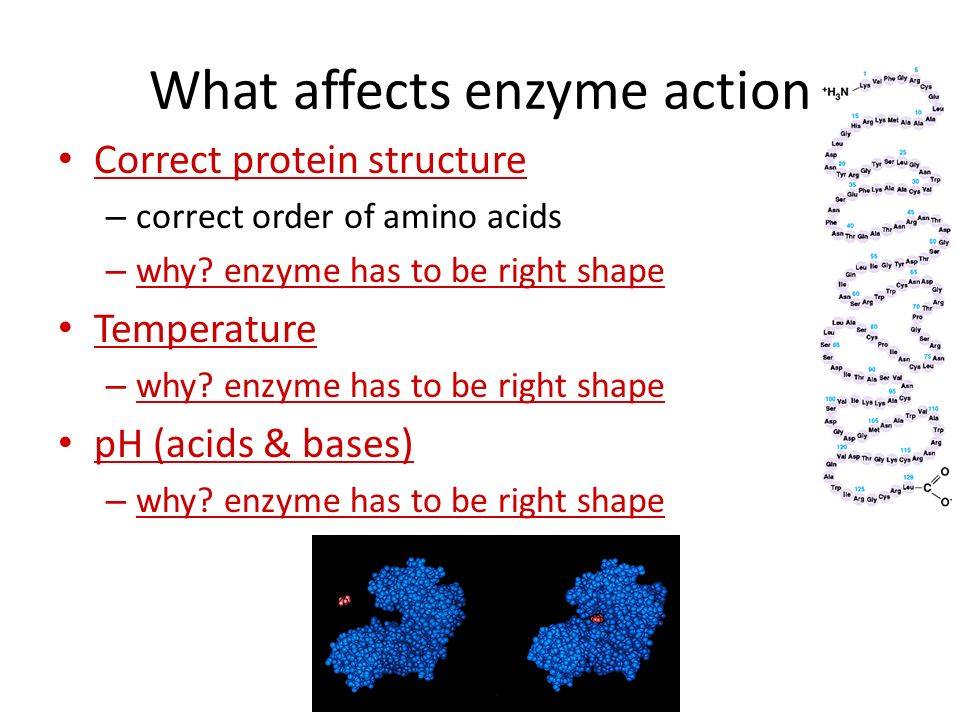 What affects enzyme action