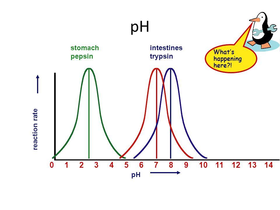 pH 1 2 3 4 5 6 7 8 9 10 11 12 13 14 stomach pepsin intestines trypsin