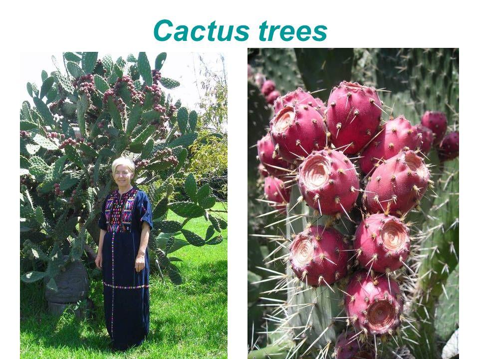 Cactus trees