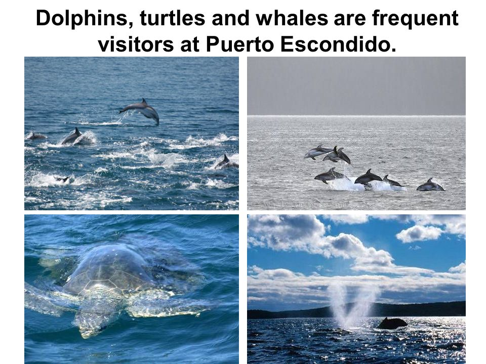 Dolphins, turtles and whales are frequent visitors at Puerto Escondido.