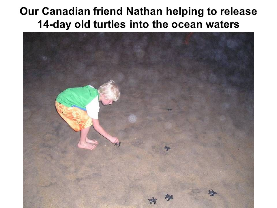 Our Canadian friend Nathan helping to release 14-day old turtles into the ocean waters