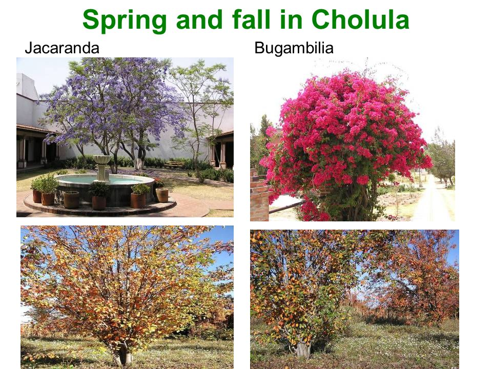 Spring and fall in Cholula