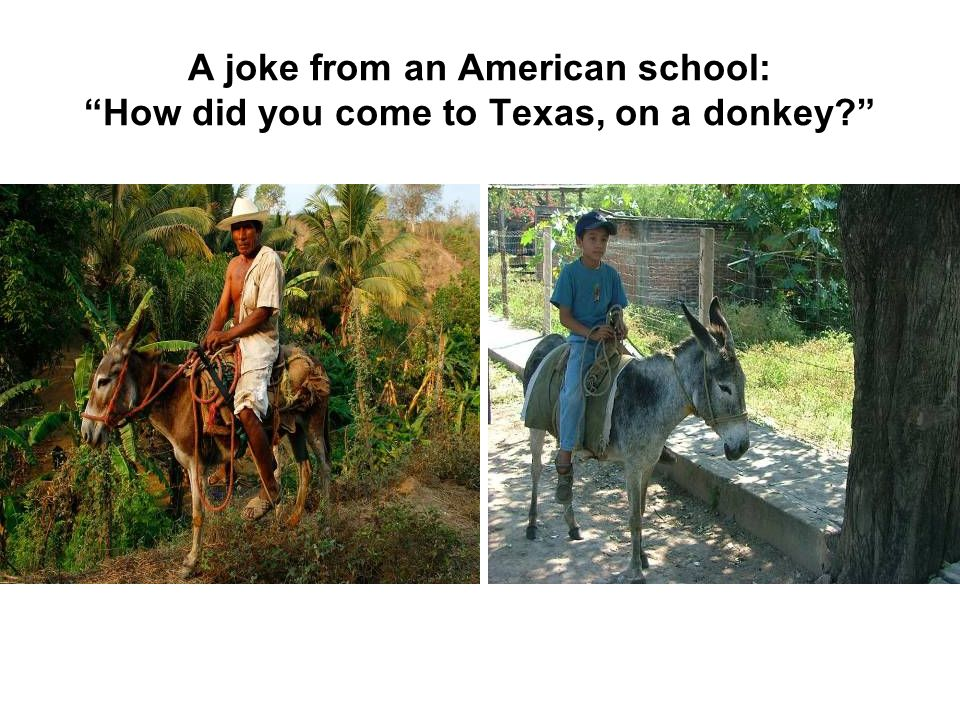 A joke from an American school: How did you come to Texas, on a donkey