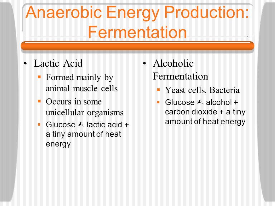 Anaerobic Energy Production: Fermentation