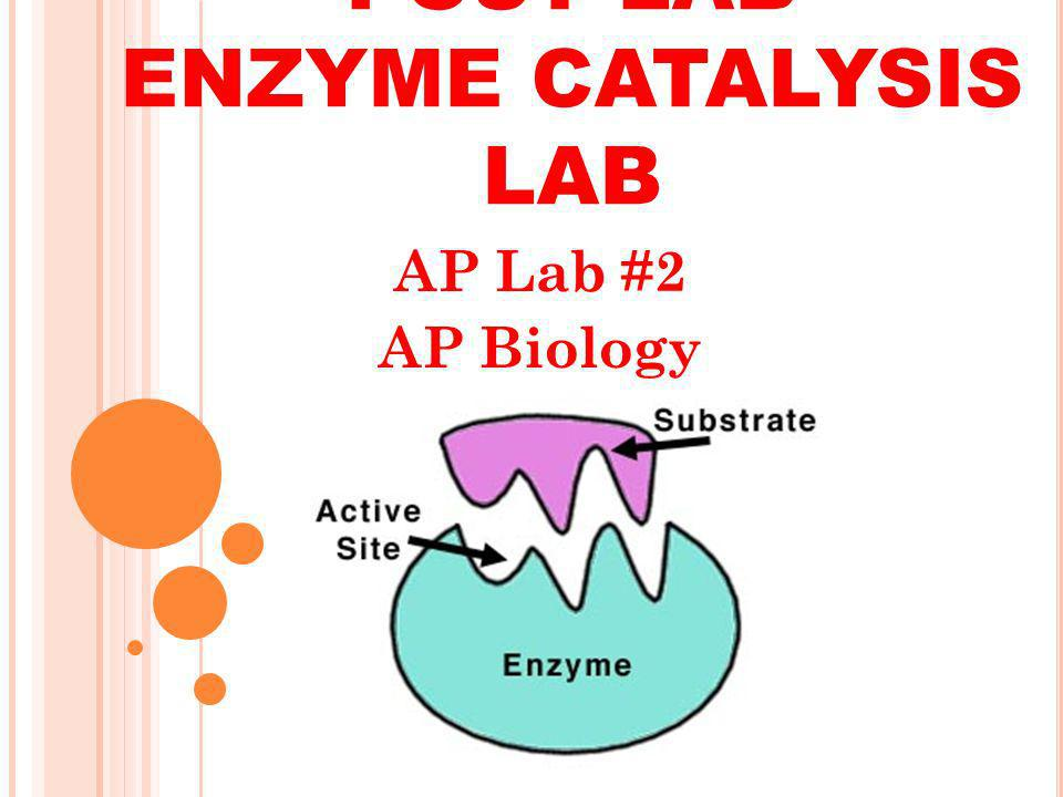 POST LAB ENZYME CATALYSIS LAB