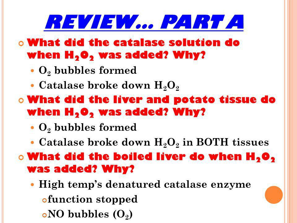 REVIEW… PART A What did the catalase solution do when H2O2 was added Why O2 bubbles formed. Catalase broke down H2O2.