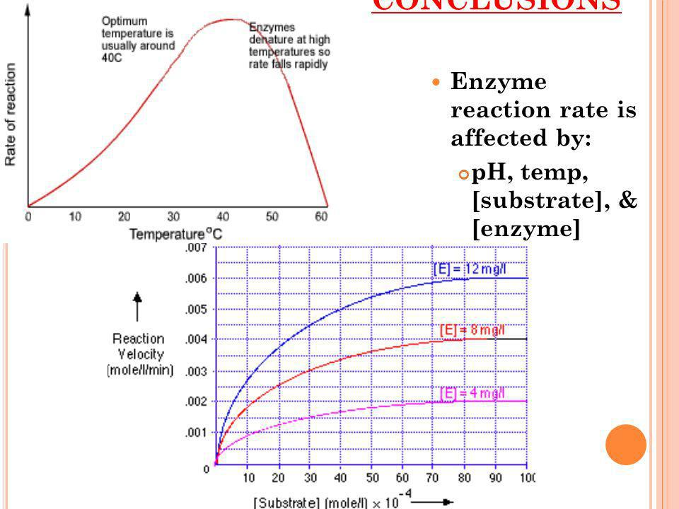 CONCLUSIONS Enzyme reaction rate is affected by: