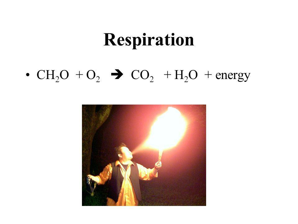 Respiration CH2O + O2  CO2 + H2O + energy