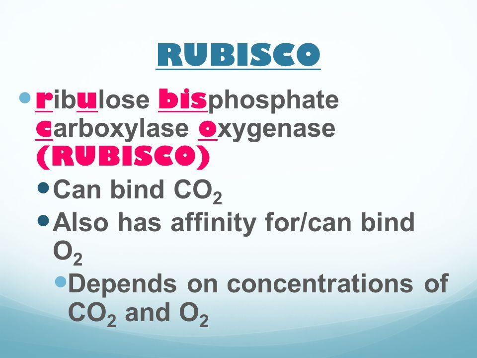 RUBISCO ribulose bisphosphate carboxylase oxygenase (RUBISCO)