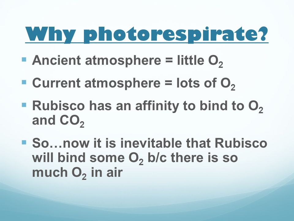 Why photorespirate Ancient atmosphere = little O2
