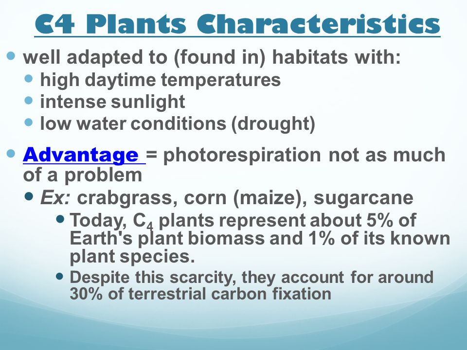 C4 Plants Characteristics