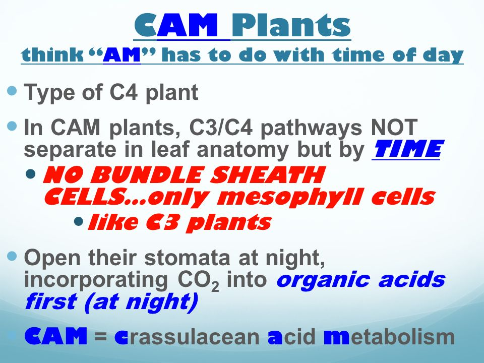 CAM Plants think AM has to do with time of day