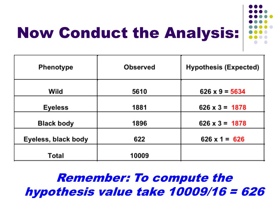 Now Conduct the Analysis: