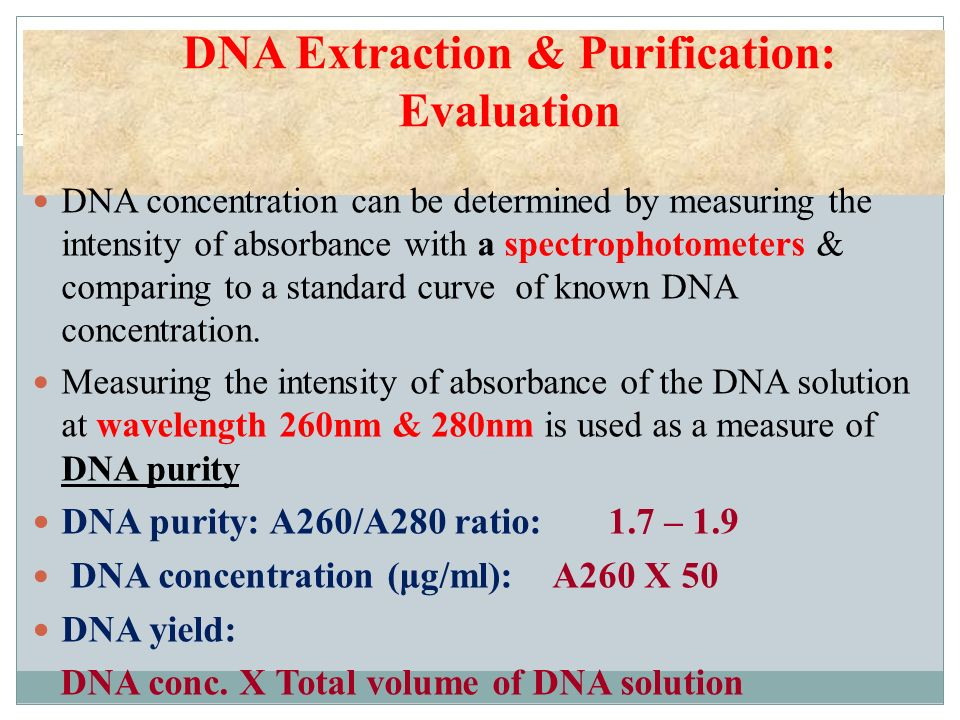 DNA Extraction & Purification: Evaluation