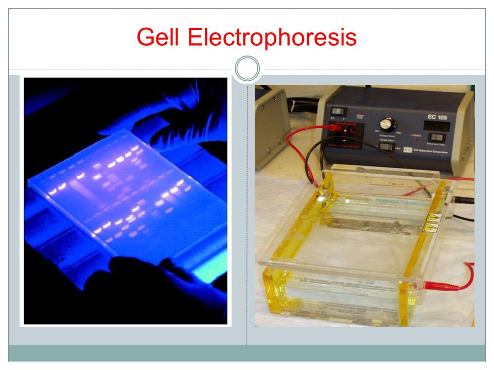 Gell Electrophoresis