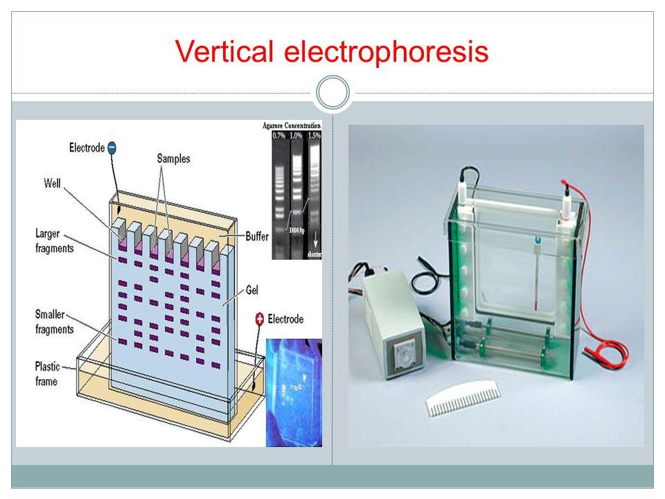Vertical electrophoresis